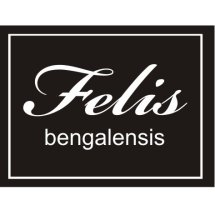 felis bengalensis