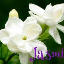 Jasmin Shop Semarang