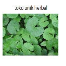 toko unik herba
