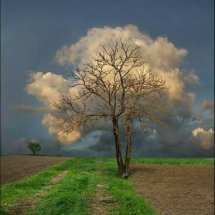 Cloud n Tree
