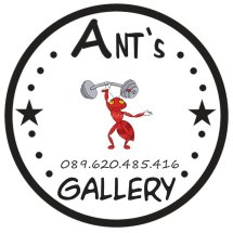 Ants Gallery