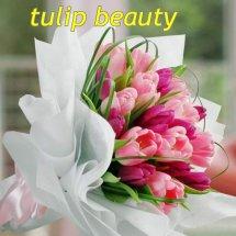 TULIP BEAUTY 88