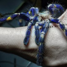 Aoterra Exotic Pet