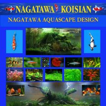 Nagatawa Aquascape