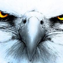 eagle store