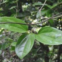 Pondok Herbal Papua