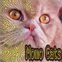 Logo momo cats
