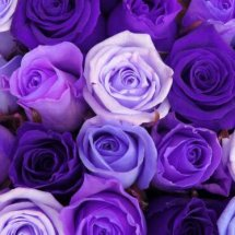 Purple violet shop