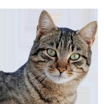 Kandang Kucing Jakarta