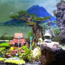 Tematic Aquariuscape