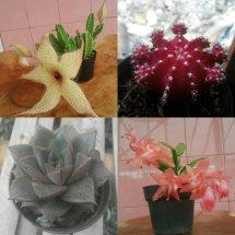 kitaka plants