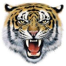 Tiger Accesories Bikers