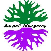angel nurserry