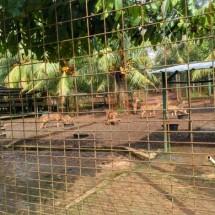Ayam Bumbu Sukarti