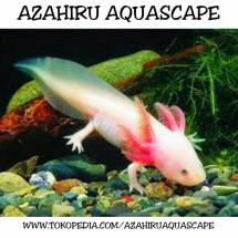Azahiru aquascape