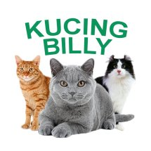 Logo Kucingbilly