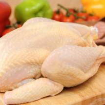 Logo Ayam Broiler Sunone