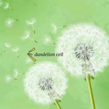 dandelion cell