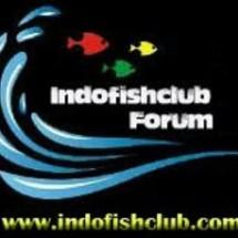 Indofishclub