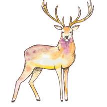 Sel Punca Sehat Logo