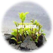 Jaya Motorr Logo