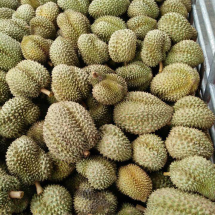 young durian