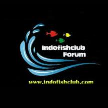 IFC IndoFishClub