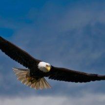 Eagle High Technology