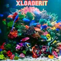 Xloaderit