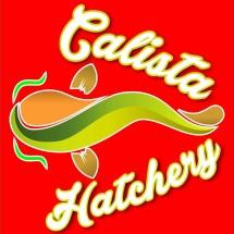 Logo Calista Aquakulture