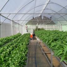 Hidroponik Casa Farm