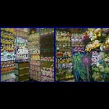 Capit's Dolls Shop