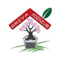 GRIYA ADENIUM