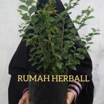 Logo RUMAH HERBALL