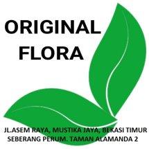 Logo ORIGINAL FLORA