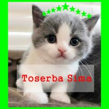 Logo Toserba Sima