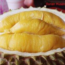 Logo durianmusangking