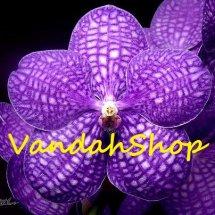 Logo Vandah-Shop
