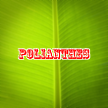 polianthes Logo
