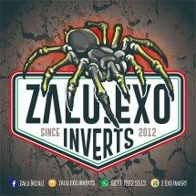 Logo Z Exo Invert
