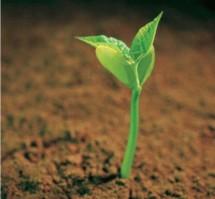 Seed Garden