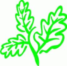 Distributor Herbal
