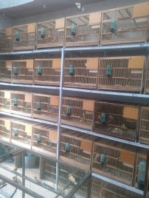Yulianto Bird Farm