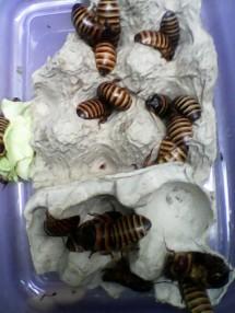 rafa insecta shop