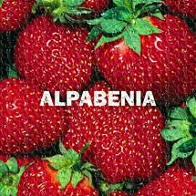 ALPABENIA