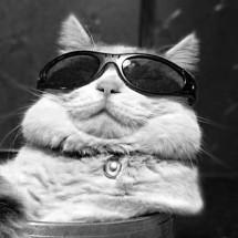 Katzen Gebrauchtsachen