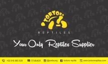 tortoro reptiles