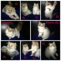 Cat C-Lover