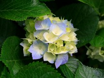 Gustina Herbal