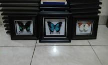 Frame Insect Center